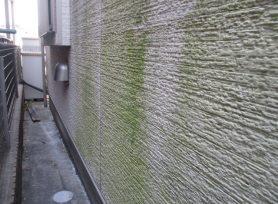外壁の汚れに注意!苔や藻は外壁劣化の原因|岡崎市・西尾市の外壁塗装専門店カナルペイント