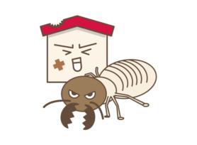 シロアリが発生するのはなぜ?|岡崎市・西尾市の外壁塗装専門店カナルペイント